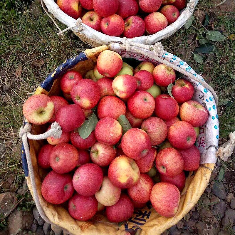 大凉山盐源丑苹果嘎啦红富士整箱10冰糖心小苹果新鲜水果8.5斤