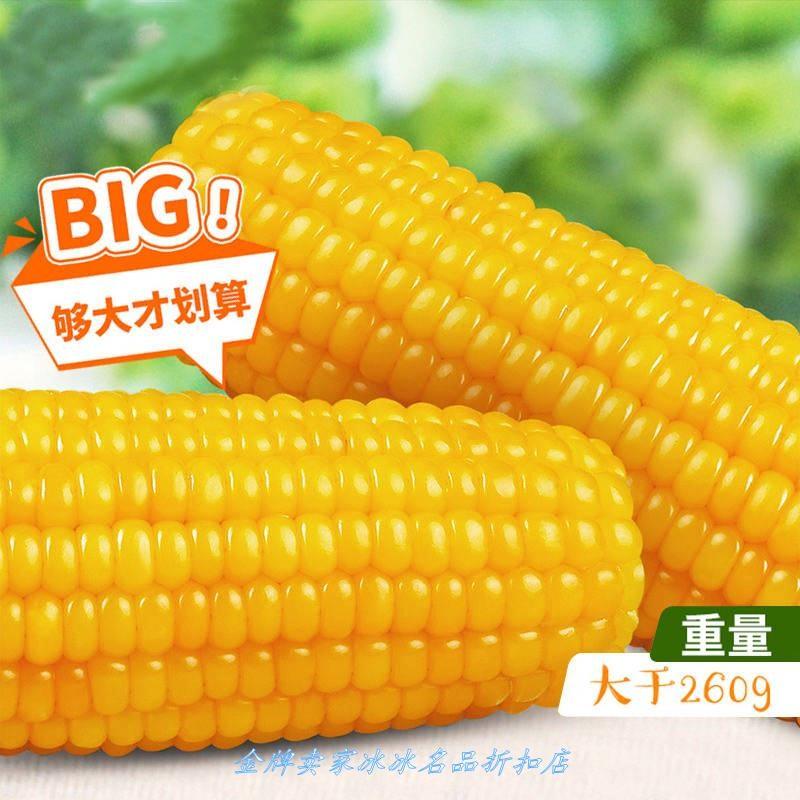 东北农嫂玉米甜糯粘玉米棒水真空新鲜果即食玉米10支黏玉米粒