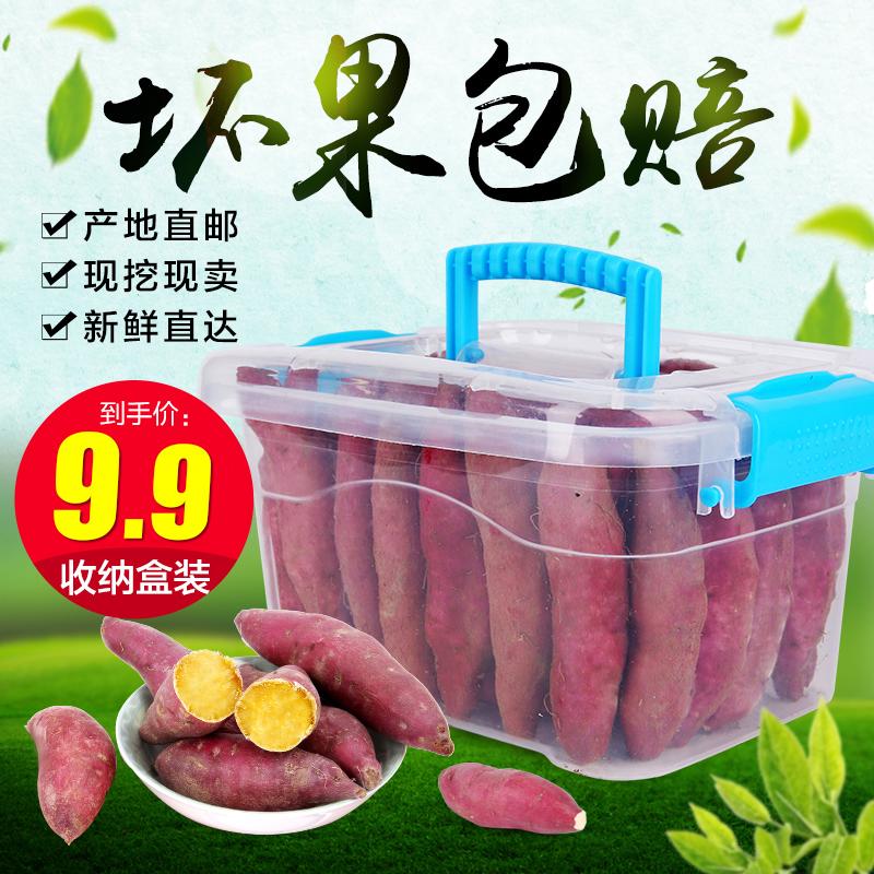 新鲜小号临安天目山小香薯5斤装农家自种小红薯板栗番薯地瓜山芋