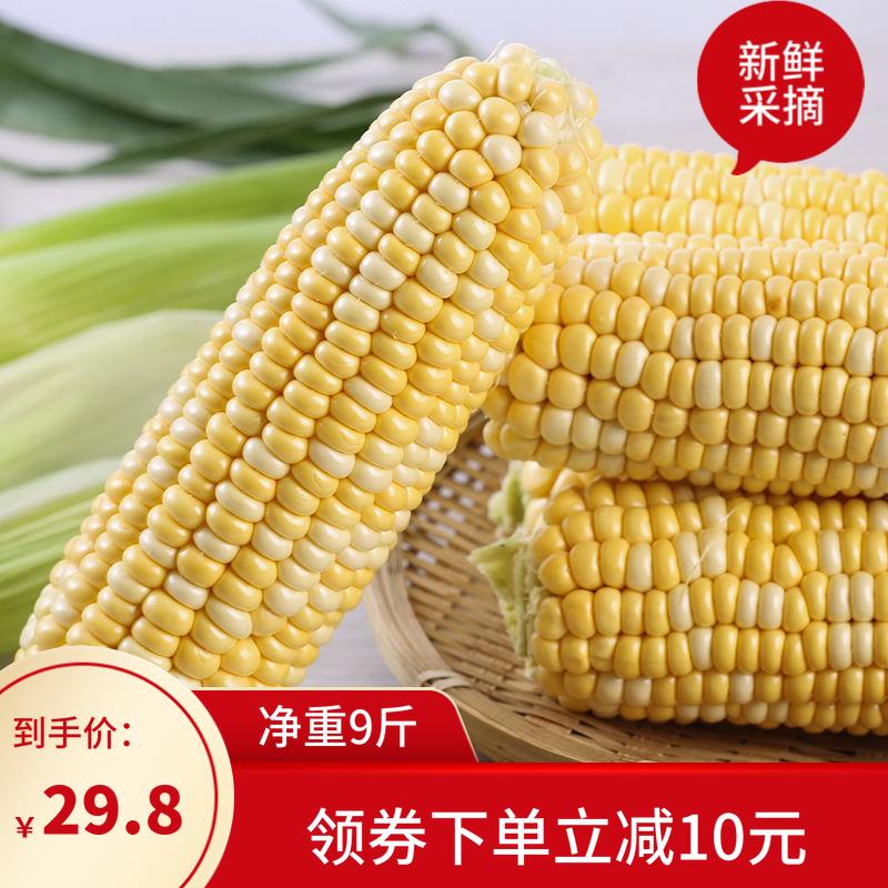云南水果玉米9斤新鲜生吃甜玉米棒子粒可生吃谷苞米蔬菜非糯黏