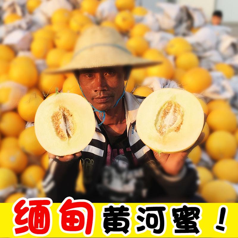 伊丽莎白瓜新鲜水果黄金瓜缅甸香瓜大甜瓜黄河蜜瓜带箱8-10斤包邮图片