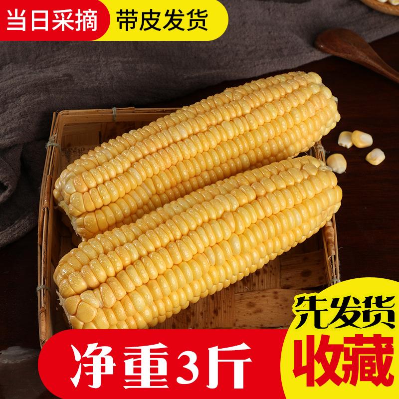 水果玉米新鲜当季整箱现摘时令助吃货甜糯玉米棒农产品蔬菜即时