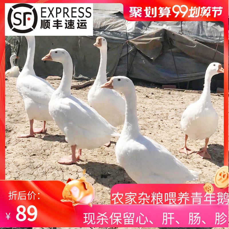 大白鹅鹅肉青年鹅鹅掌活体冷冻农家散养新鲜大鹅非老鹅现杀约6斤