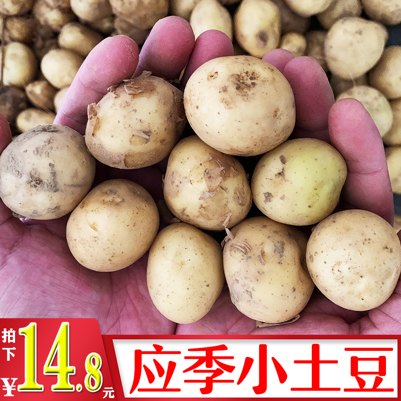 木味果 湖北新鲜小土豆小果5斤装 新鲜蔬菜 沙甜软糯黄心马铃薯
