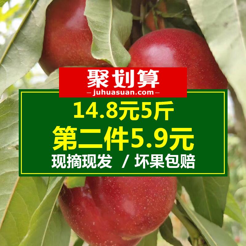 砀山桃子5斤黄心油桃水果新鲜当季现摘应季时令黄肉桃脆桃助农10