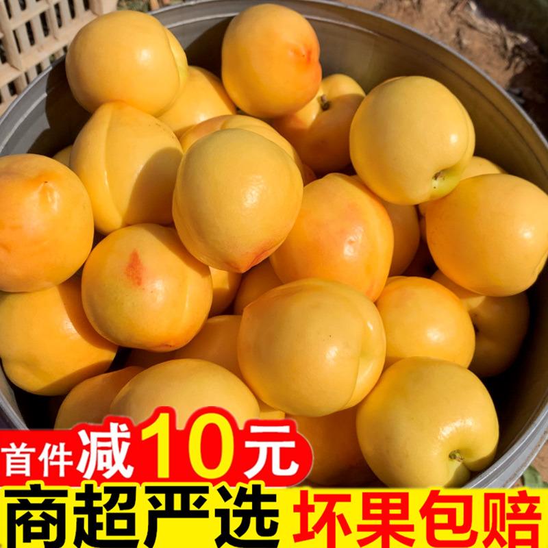 顺丰包邮 黄杏新鲜5斤当应季新鲜水果整箱现摘现发酸甜大黄杏子3