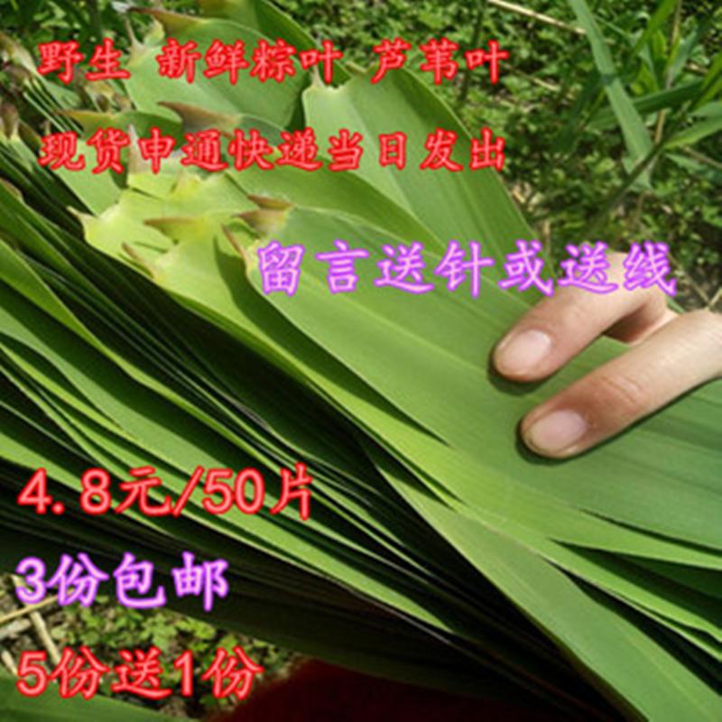 新鲜粽叶芦苇叶 粽子叶 非竹叶 柴叶 棕叶 纯天然野生粽叶3份免邮
