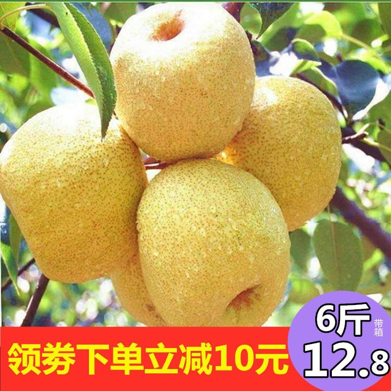 现季正宗安徽砀山酥梨10斤贡梨带箱6斤新鲜水果农家汤山梨子包邮