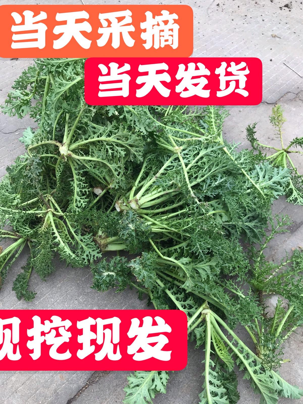 雪里红雪菜新鲜雪里蕻菜小青菜叶菜类蔬菜春不老腌制咸菜酸菜三斤