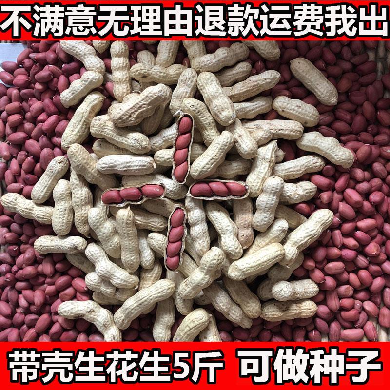 2019年红皮花生带壳红花生米生新货红衣花生种籽新鲜 生花生带壳
