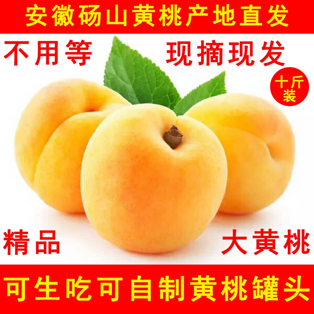 现摘现发大黄桃砀山黄桃桃子当季孕妇新鲜水果鲜毛桃脆甜10斤包邮