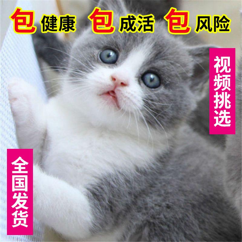 出售家养可爱粘人其它宠物品种齐全