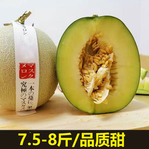 Reticulated Melon Soft Waxy Ice Cream Melon Melon Fresh Fruit Hainan Meilong Cantaloupe 7.5-8.5 kg