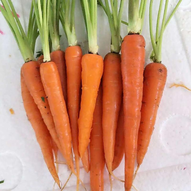 新鲜蔬菜迷你去叶手指胡萝卜西餐沙拉食材 500g 江浙沪皖5份包邮