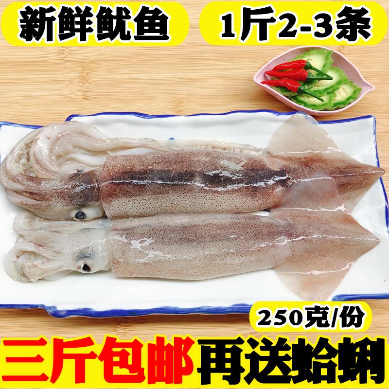 海鲜 水产 鲜活 鱿鱼 新鲜 冷冻 野生 烧烤