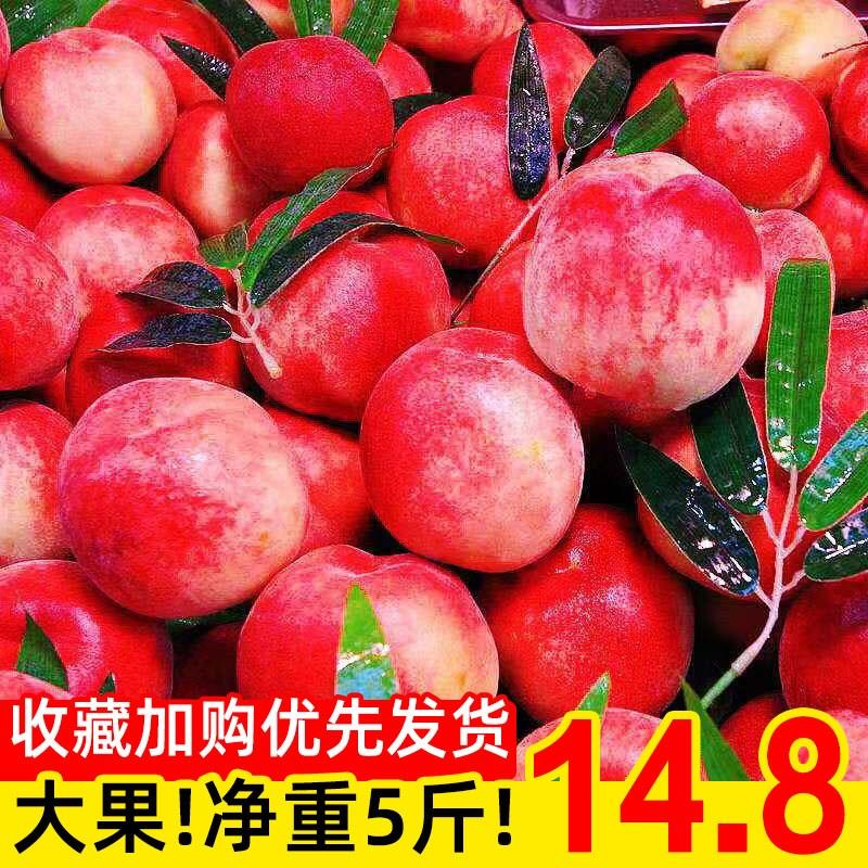 现摘新鲜桃子水蜜桃5斤脆桃毛桃当季孕妇水果现货大血桃黄桃油桃