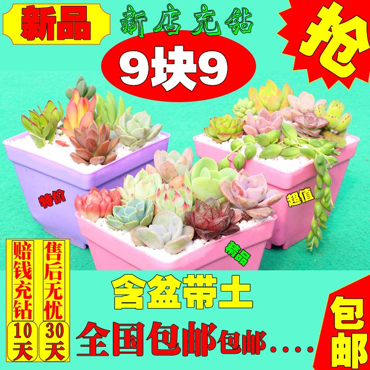 新品多肉植物精品组合盆栽九块九包邮9元9赔钱含送营养土卧室