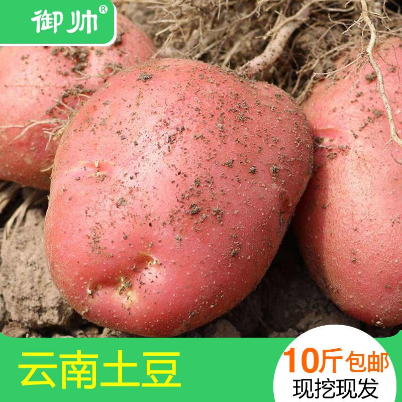 云南红皮土豆新鲜农家自种包邮洋芋黄心马铃薯整带箱9.9斤现发