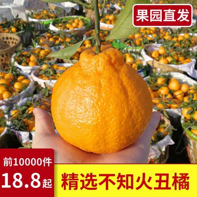 新品四川不知火丑橘丑八怪新鲜孕妇应季水果5斤耙耙柑蜜桔子10