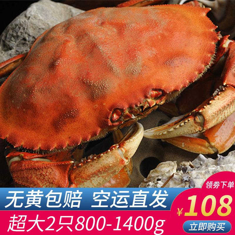 英国面包蟹新鲜鲜活熟冻超大4斤即食珍宝蟹梭子蟹黄金蟹香辣海鲜