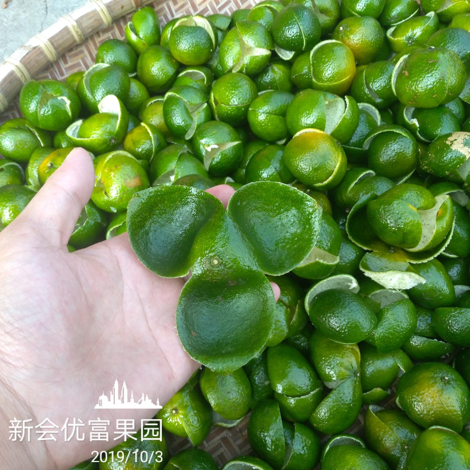 广东江门新会特产青柑鲜果皮老树果生晒纯青陈皮干小青柑老青皮干