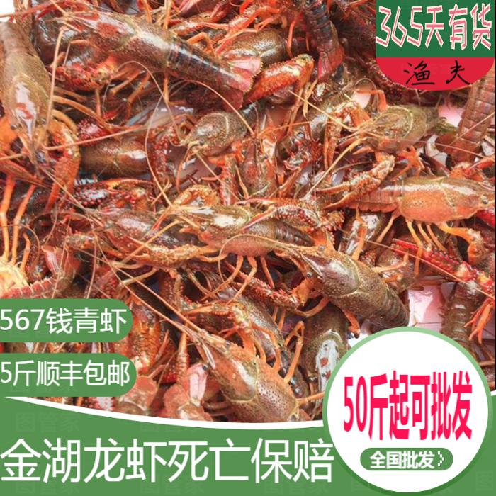 青壳虾567钱大小龙虾 鲜活 5斤清水野生金湖盱眙小龙虾稻田虾活虾