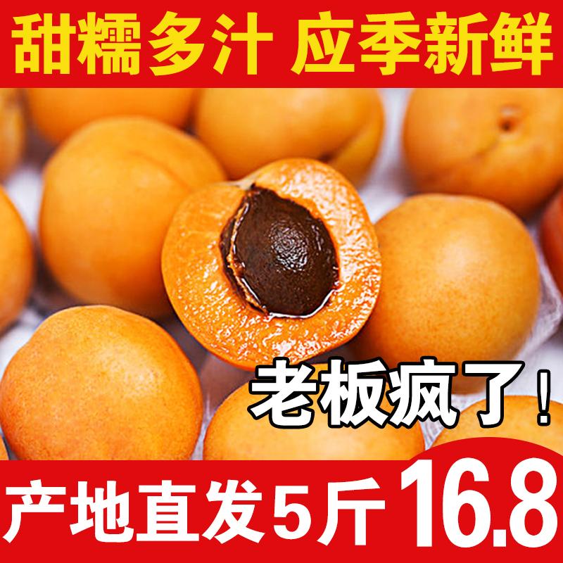 新鲜杏子应季时令水果酸甜大杏子孕妇孩子爱吃串红杏特产净重5斤