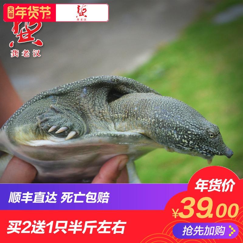 龚老汉生态甲鱼水鱼团鱼王八3年母中华鳖500g活体鲜活包邮
