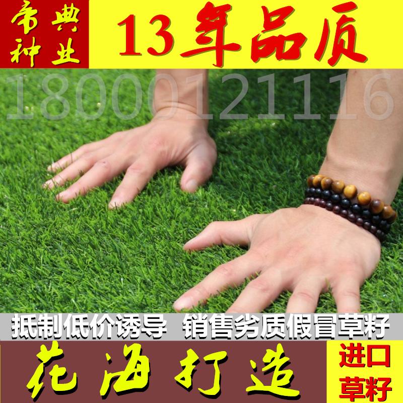 草坪种子进口不修剪四季青矮生耐践踏耐寒庭院别墅绿化护坡草籽子