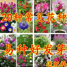 花卉种子组合套餐包邮zg7见春天四rd发芽家庭阳台盆栽花种籽