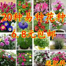 花种子阳台盆栽植物室ti7四季种易un断包邮家庭常见花卉种子