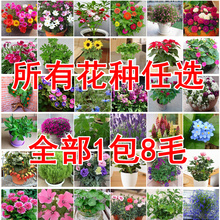 花卉种子多种任选花km6籽花种家xx量种子花四季播满9元包邮
