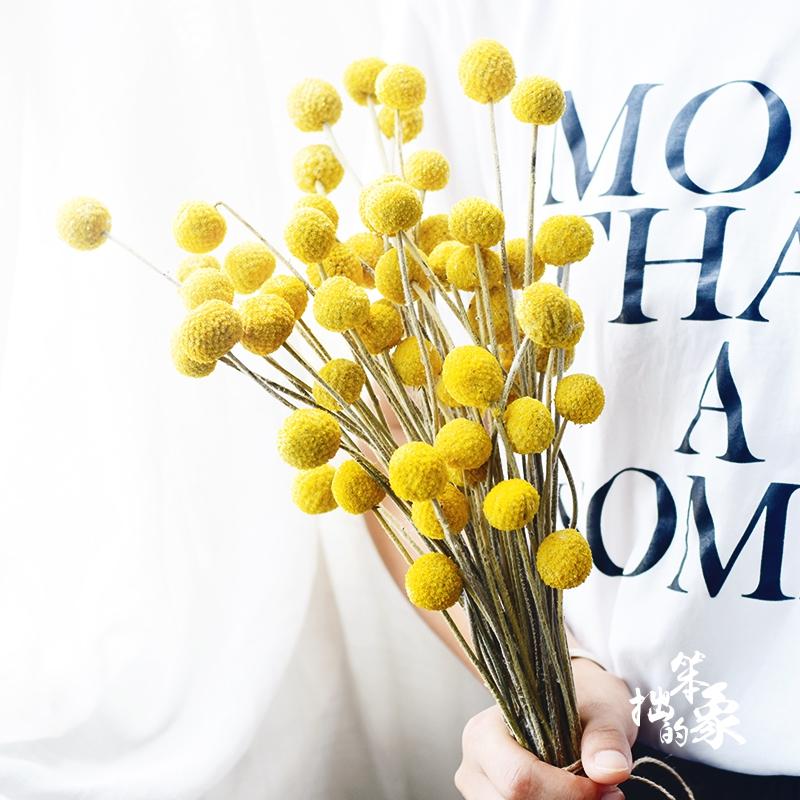 黄金球干花加花瓶套装网红干花家居摆设小清新北欧室内真花金槌花