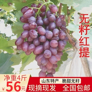 Seasonal fruits Fresh grape seedless red grapes 4 kg seedless red grapes small grapes crisp and sweet pregnant women Shandong specialty