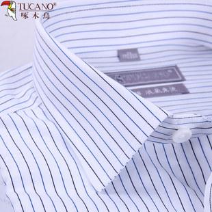 啄木鸟蓝条纹衬衫纯棉中年男士长袖春秋季商务正装全棉免烫衬衣男