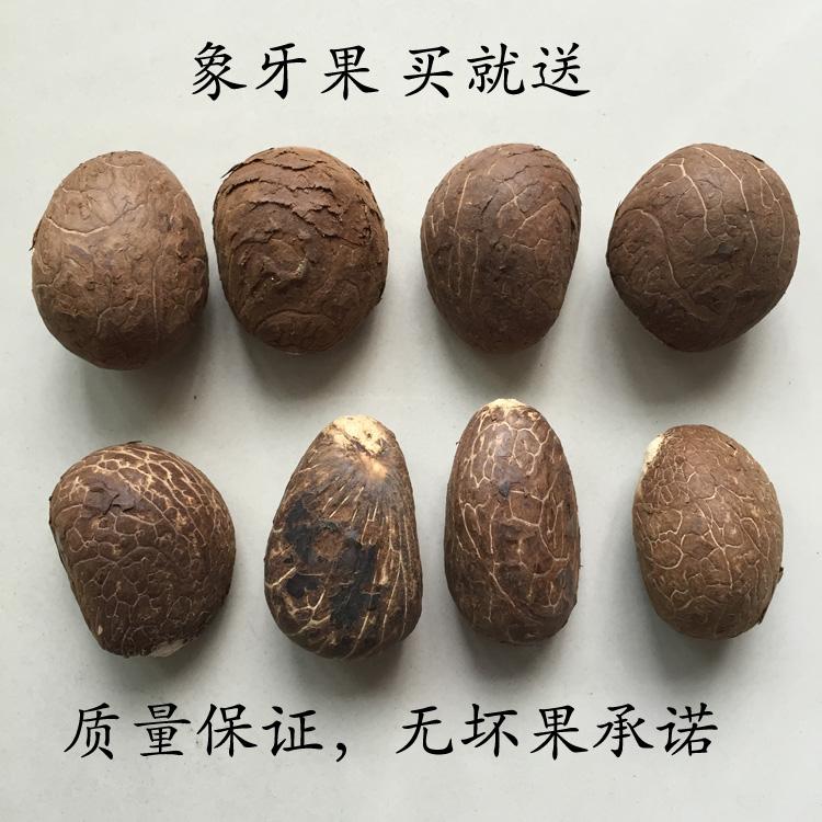 包邮象牙果原果核雕原料大果中果小果练手象牙果扁圆果三通料按斤