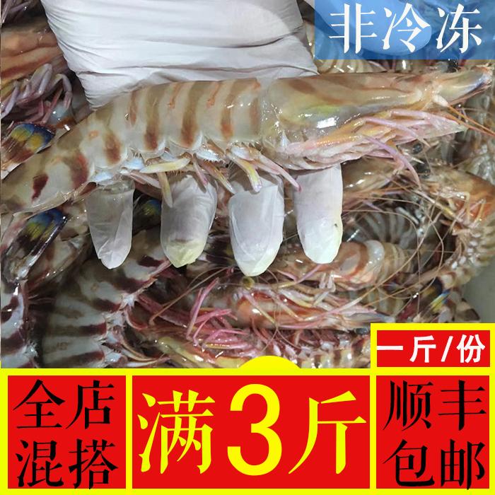 宁波野生竹节虾东海九节虾新鲜特大基围虾老虎虾鲜活500g/9-10只