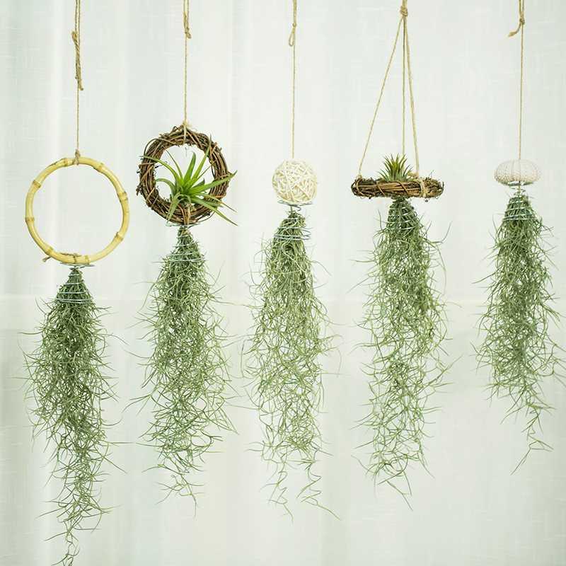 空气凤梨老人须松萝办公室垂吊植物吸甲醛防辐射花卉懒人无土绿植