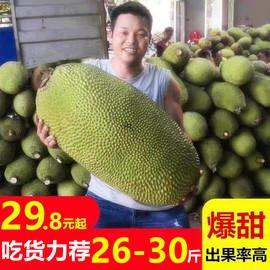 海南三亚菠萝蜜新鲜水果包邮当季干苞黄肉一整个20-40斤木波罗蜜