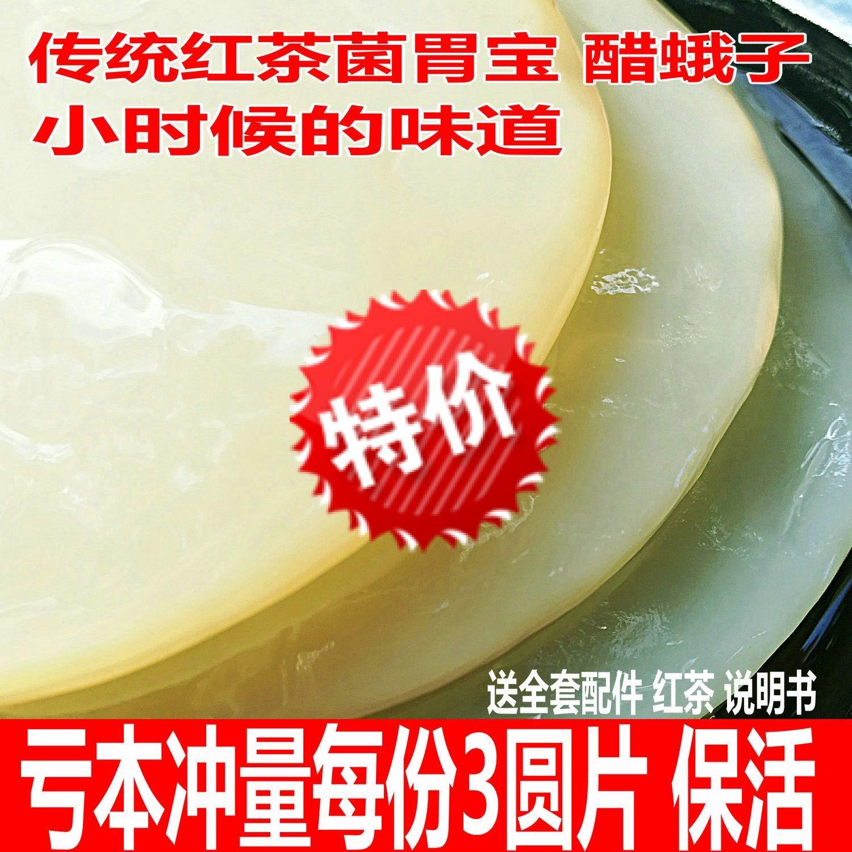 正宗传统红茶菌老胃宝醋蛾子红茶菌菌种菌种配说明书包活海宝