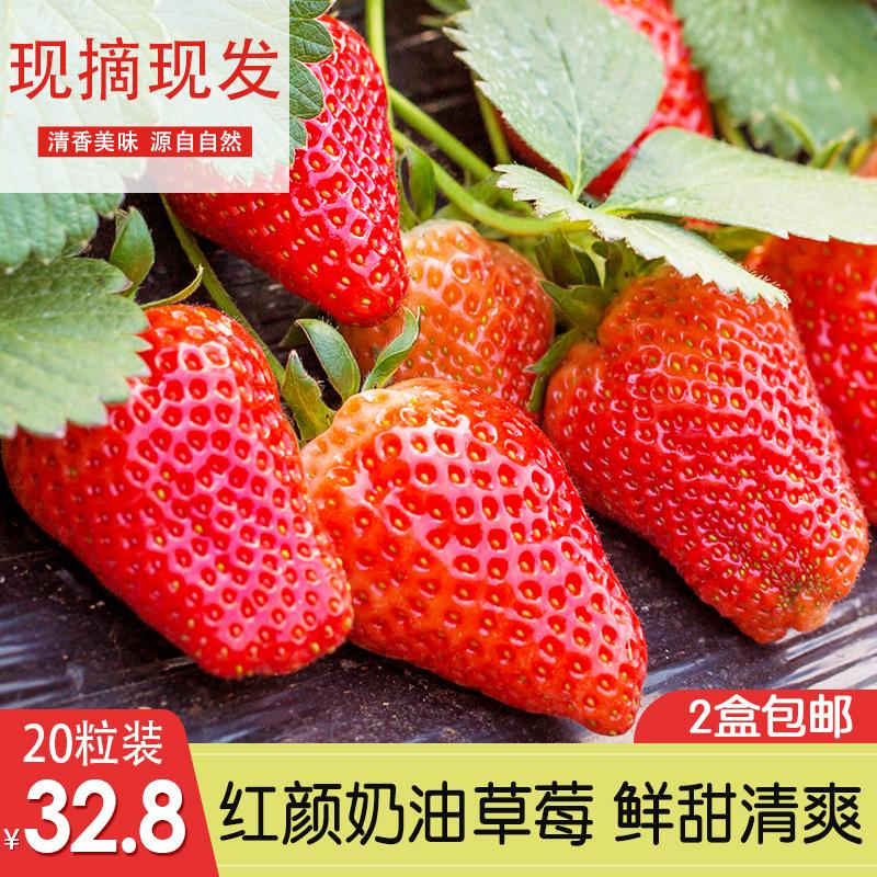 新鲜草莓大果 新鲜草莓水果礼盒装现摘现发 红颜奶油草莓盒装图片