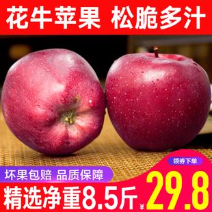 甘肃天水花牛苹果水果新鲜当季整箱苹果包邮红蛇果子 净重8.5斤装