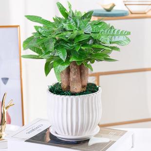 盆栽植物室内客厅办公室小盆栽花卉