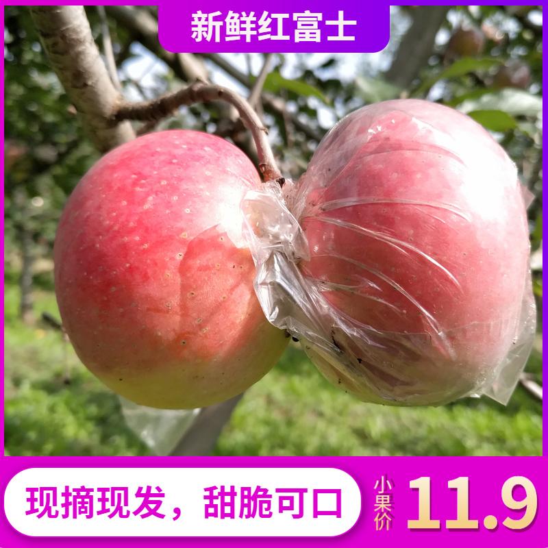 红富士苹果新鲜水果当季应季带箱5/10斤酸甜脆丑苹果包邮富士苹果