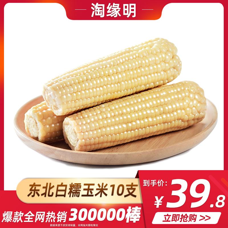 淘缘明 东北白甜糯玉米棒10支3000g非转基因黏玉米新鲜即食玉米粒
