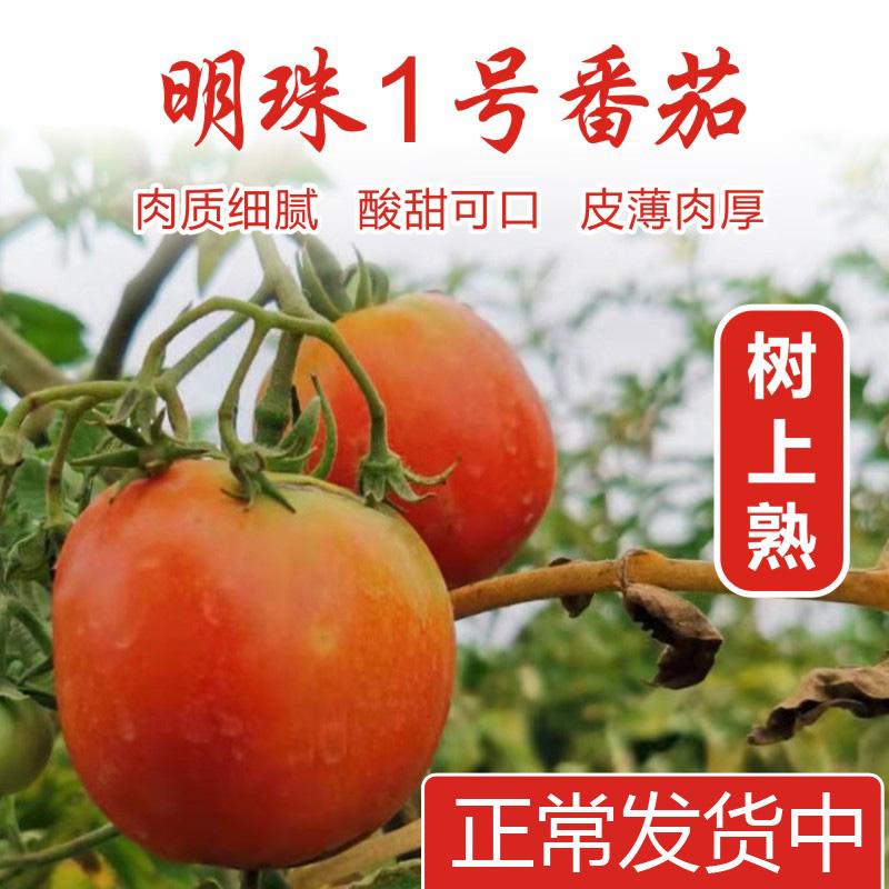 广东清远清新西红柿新鲜蔬菜番茄农家孕妇水果自然熟整箱5斤