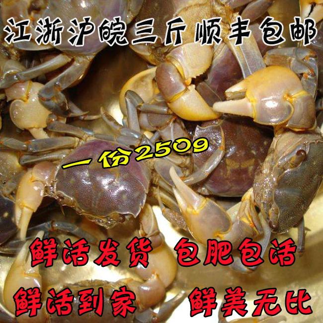 发财蟹鲜活 白玉蟹 蟛蜞蟹醉蟹螃蜞蟹 黄眼蟹 发财蟹蟹 250g一份