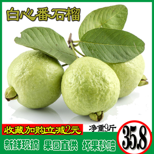 Guangxi fresh guava 10 jin Baixin farmhouse special product guava fruit is now picked crisp and sweet
