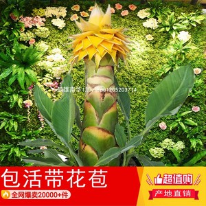 Diyong Golden Lotus Flower Buds Buddhism Flowers Courier Flowers Green Plants Gardening Succulent Potting I Want To Wish Indoor