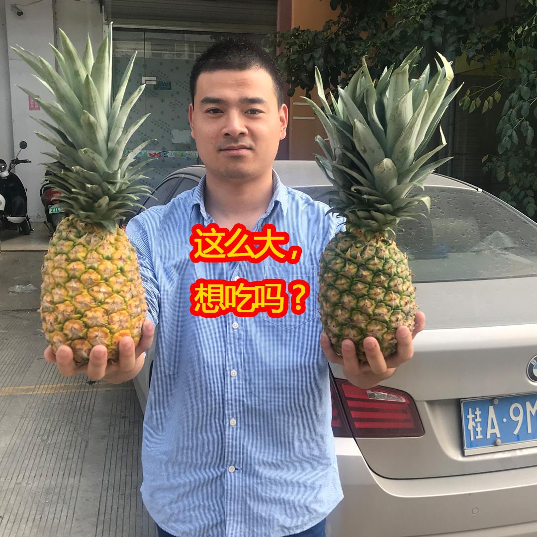 【第二件0元】海南三亚凤梨新鲜水果无眼凤梨金菠萝净重现摘发货